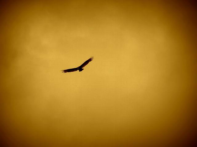 eagle-57229__480